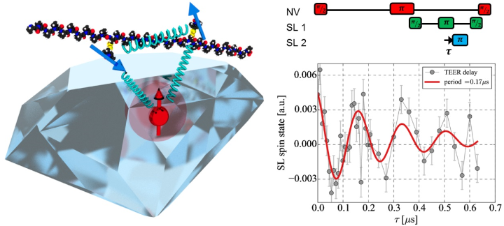 Molecular quantum spin network controlled by a single qubit